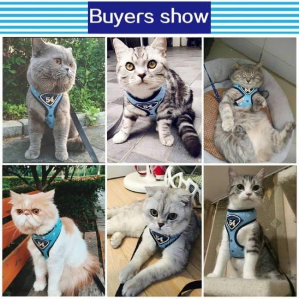 Cat HOOPET Pet Cat Vest Harness Leash Suit Set Cat