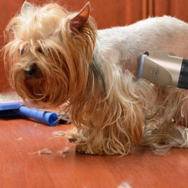 Powerful electric dog hair trimmer